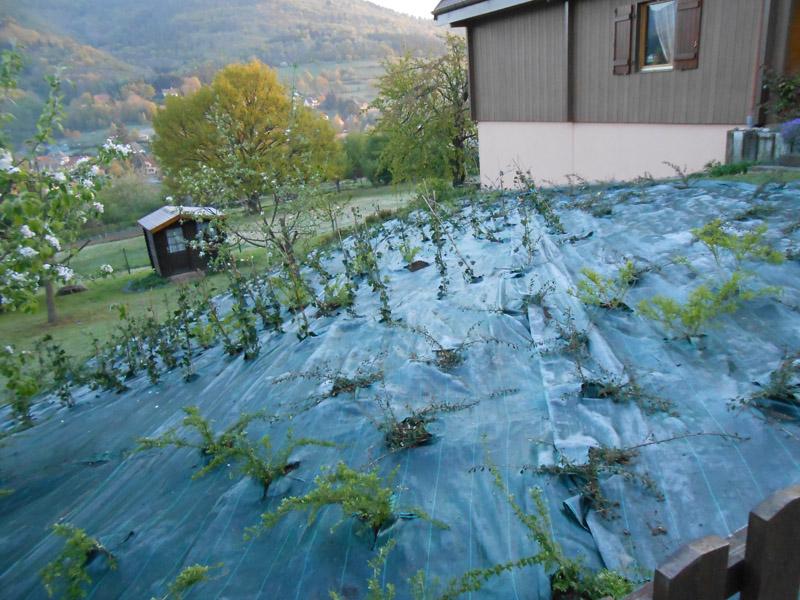 vegetalisation de talus wirth paysage With exceptional photos de bassins de jardin 3 vegetalisation de talus wirth paysage