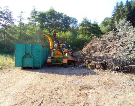 Abattage d'un bosquet